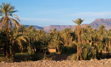 morocco-ouasis